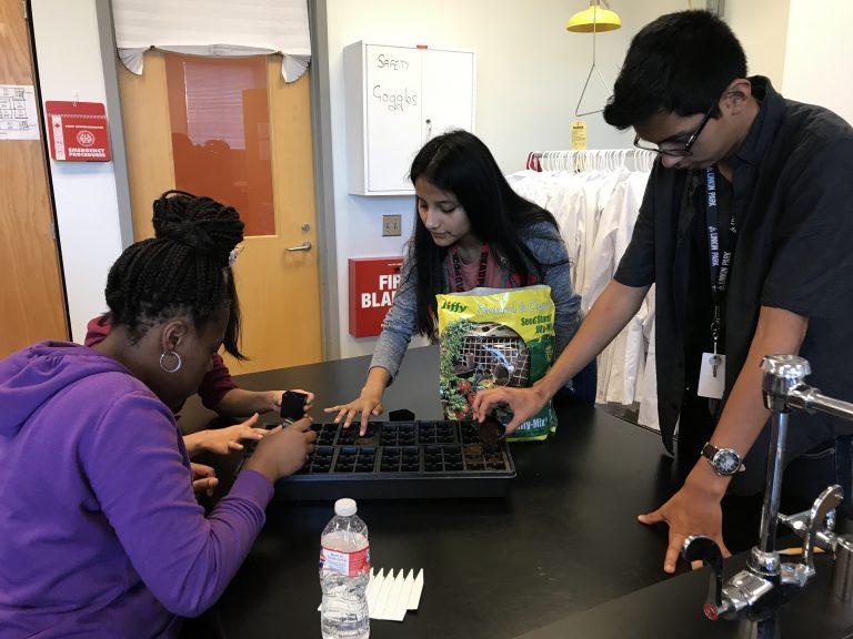 How An Internship Lead To a School Garden