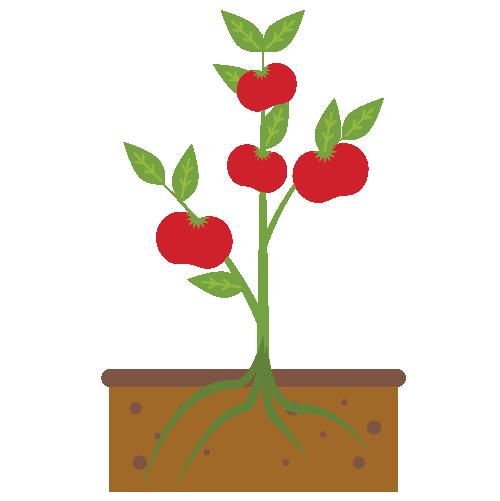 Houston Community Garden Tomato Plant Illustration