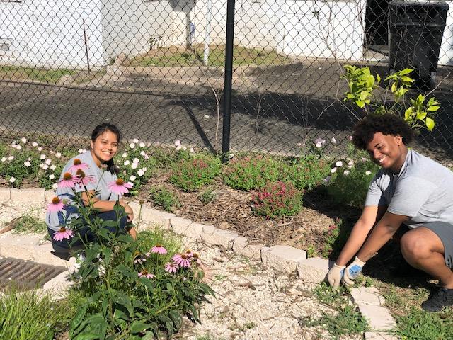 Urban Harvest in the community