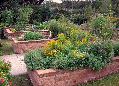 GOV_garden raised beds
