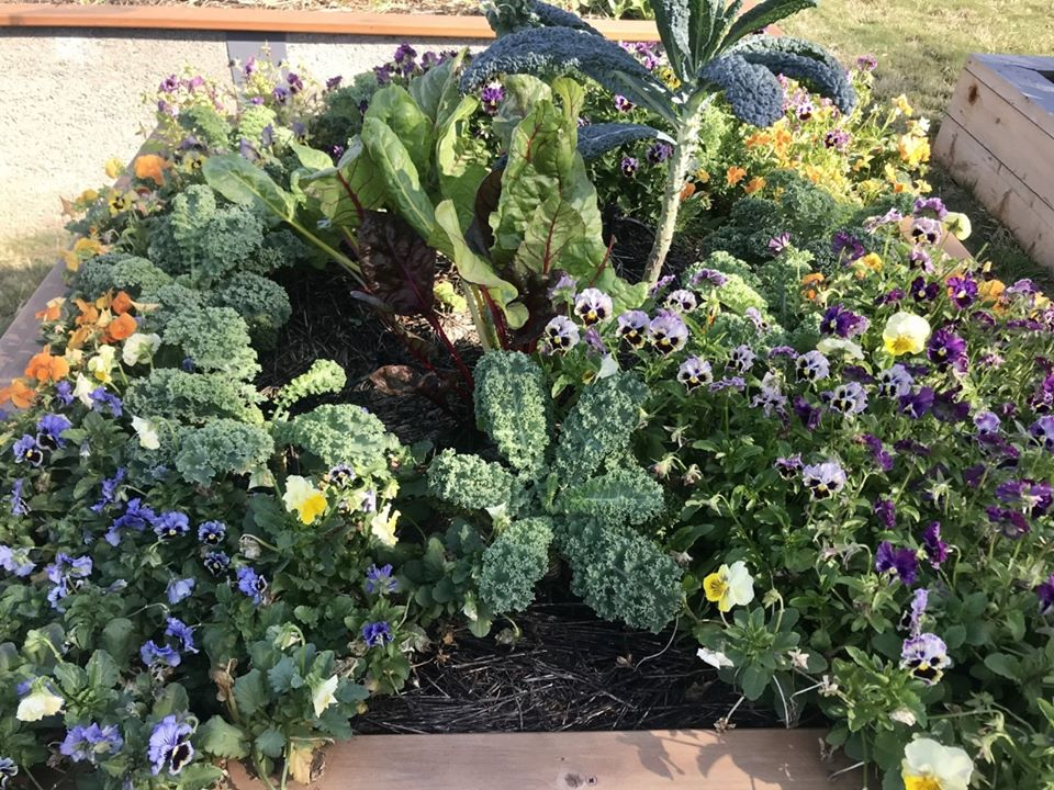 teaching garden flowers _compost webinar