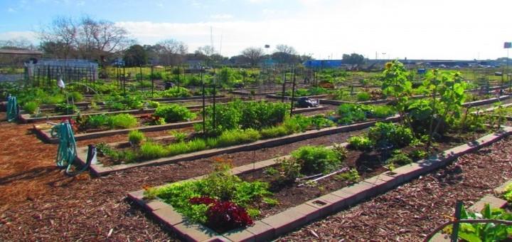 WCG gardens_infosession