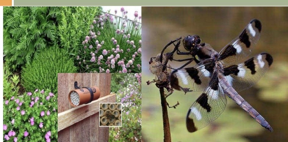 ecological pest mgt webinar