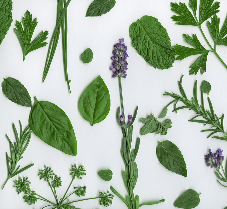 Culinary Herbs for Fall planting