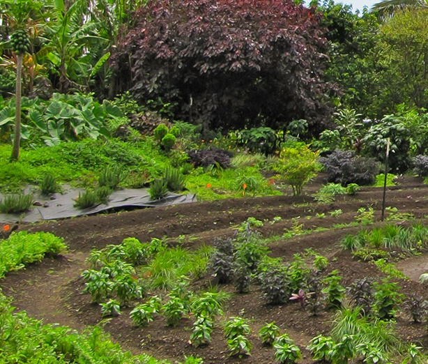 PC garden_food forest cropped