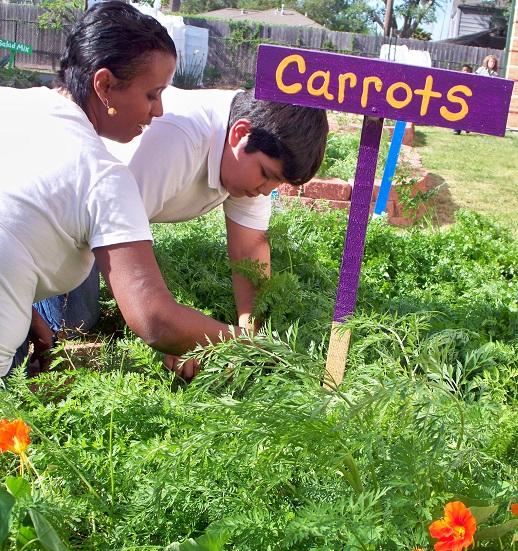 Carrots_tinsley_kellie_studentresized