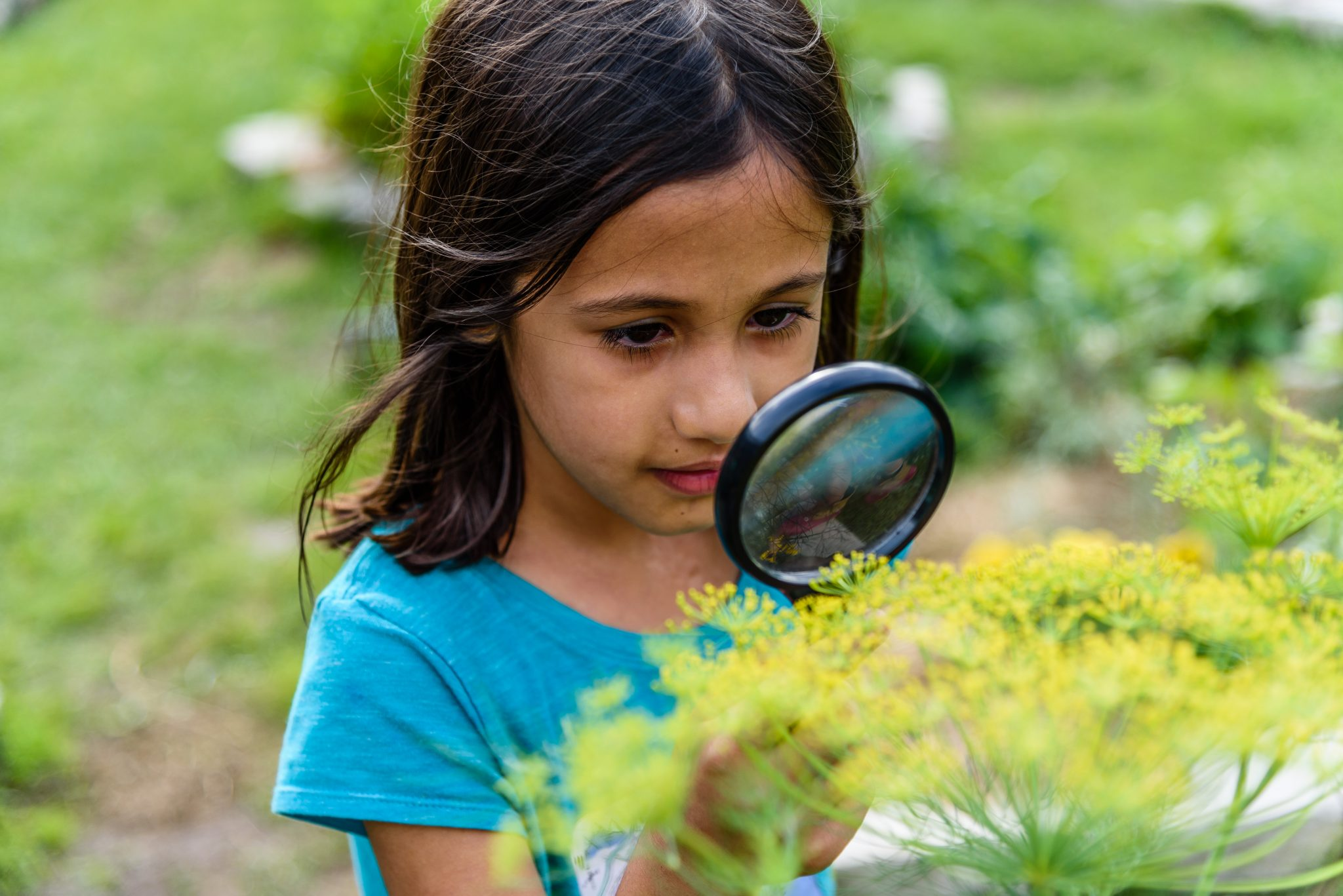 Girl with Magnifying Glass Dill Study