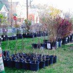 Fruit Tree Sale past