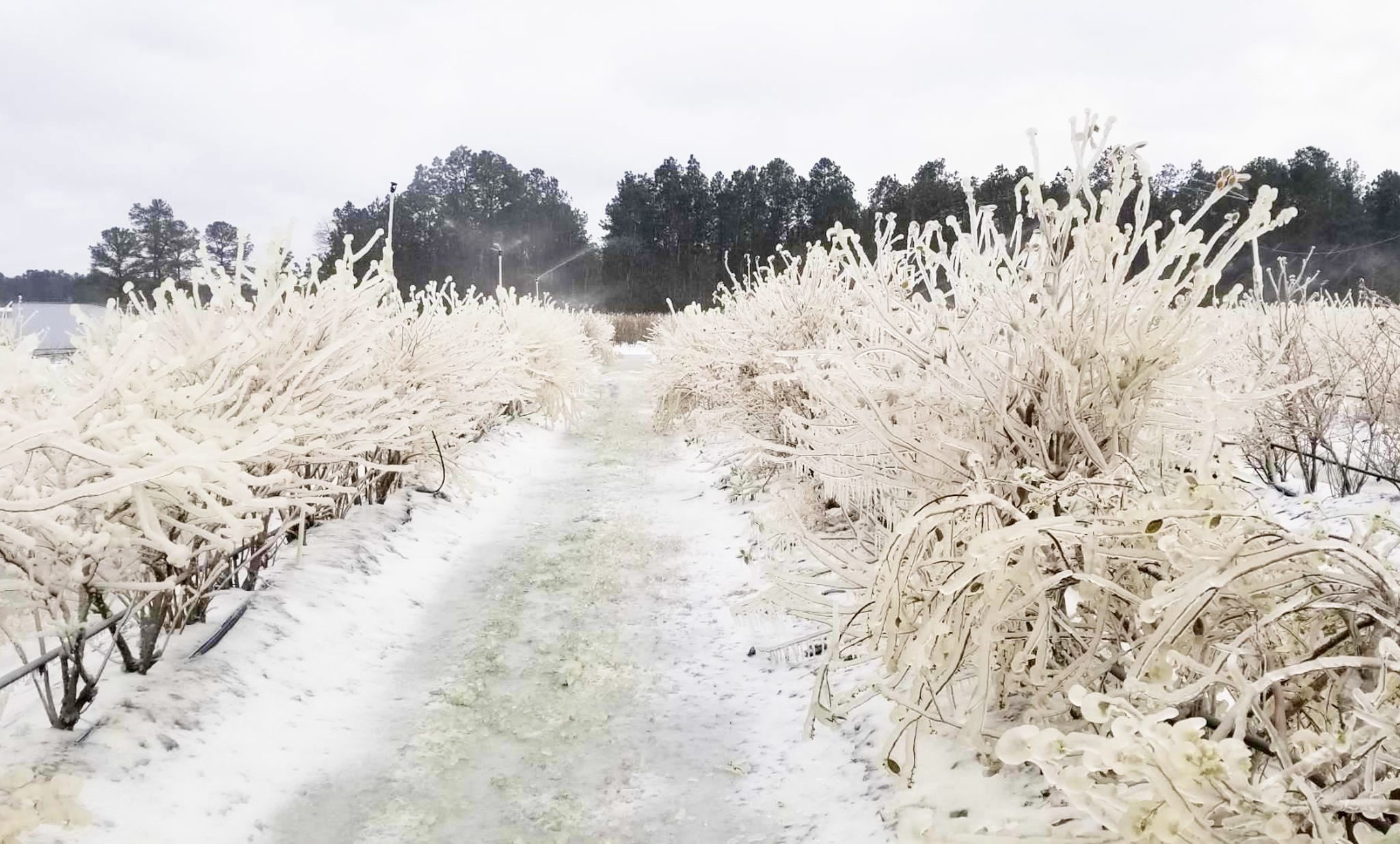You are currently viewing Winter Storm Stories: The Berry Best