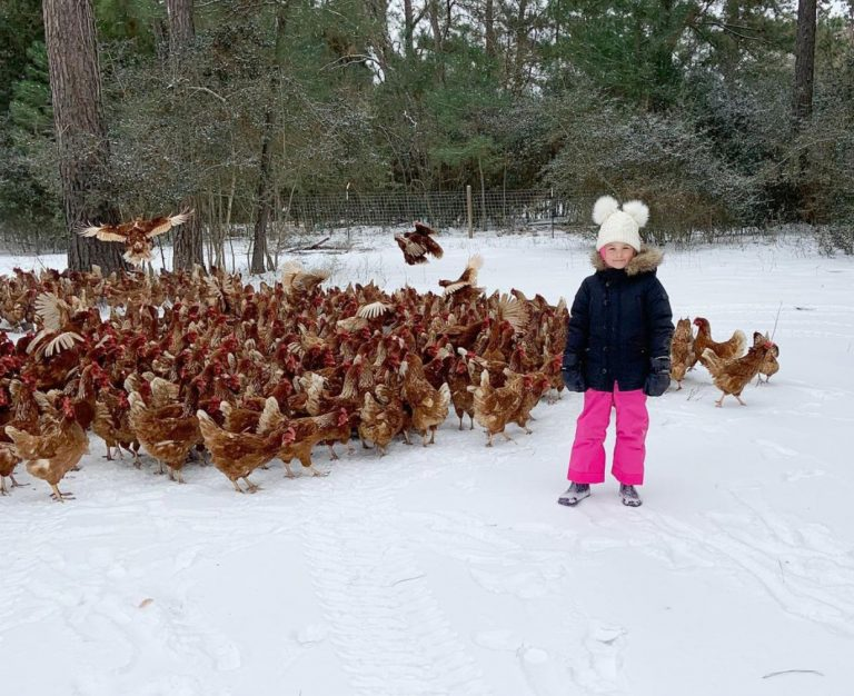 Winter Storm Stories: Three Sisters Farm