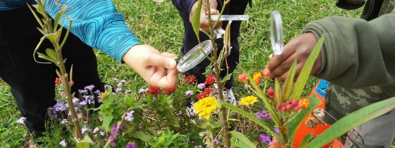 Butterfly Plants and Children Observing with Magnifying glasses